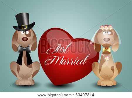 A Couple Of Dog Just married