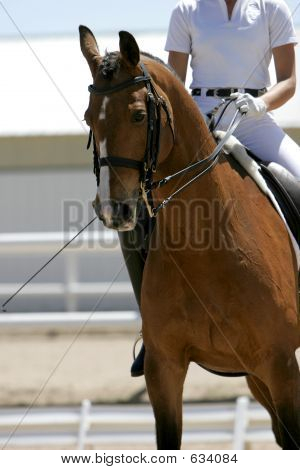 Dressage/Equestrian Riding #2