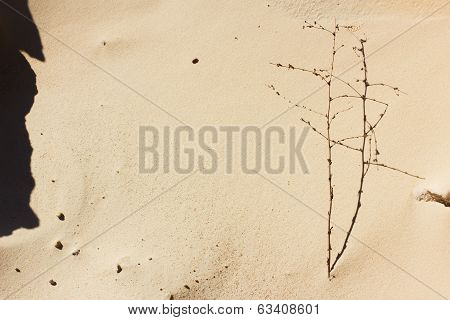 Texture of sand and branch
