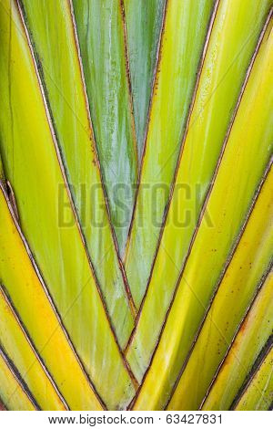 Tropical Plant Detail