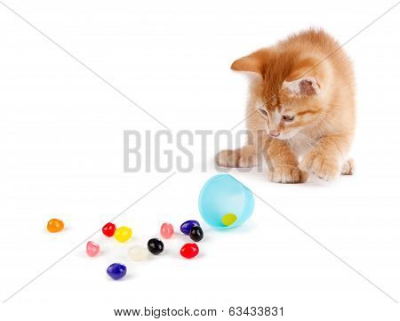 Cute Orange Kitten Spilling Jelly Beans Out Of A Plastic Easter Egg On White