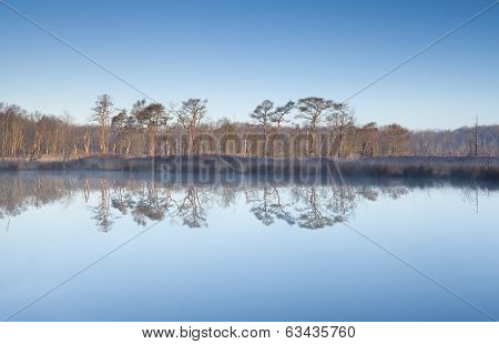 Trees Over Blue Sky Reflected In Swamp Water