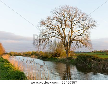 Bridgwater and Taunton Canal Somerset England UK