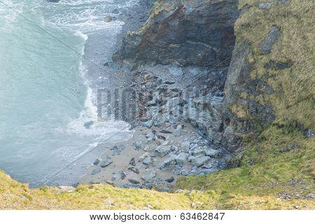 Seals on the beach near Godrevy St Ives Bay Cornwall coast England UK
