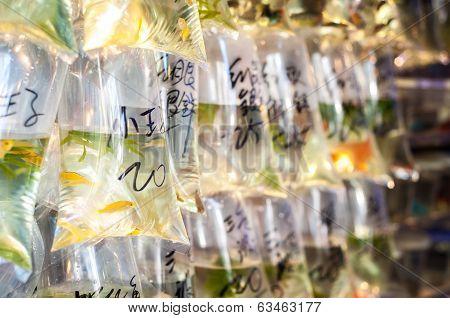 Tropical fish hanging in bags at Tung Choi Street goldfish market, Hong Kong