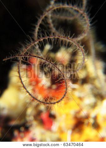Spiral wire coral