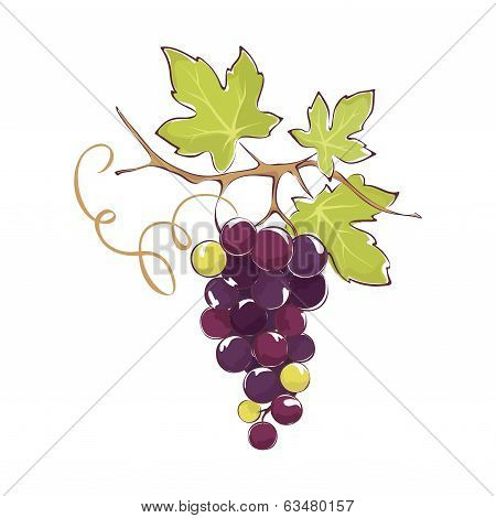 Bunch of black grapes