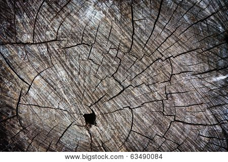 Grungy wood trunk cross section, background.