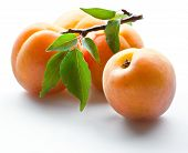 stock photo of apricot  - Fresh ripe apricot with leaves on white - JPG
