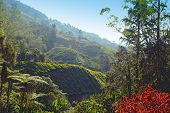 pic of cameron highland  - Close up picture of tea plantation taken in Cameron Highlands Malaysia - JPG
