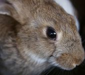 stock photo of rabbit hutch  - Young rabbit animal farm and breeding. Whole background.