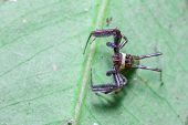 stock photo of eat me  - Spider leaves me standing still on the leaf - JPG