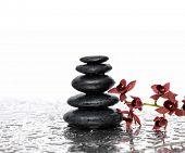 Branch orchid and black stones on wet background