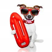 pic of lifeguard  - funny lifeguard dog with red lifesaver buoy - JPG