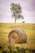 Bay bales and lone tree in a field on rural Prince Edward Island, Canada. With vintage filter effect