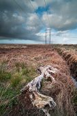 picture of boggy  - ancient Bog-wood in a rural peat bog field in Ireland