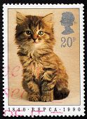 UNITED KINGDOM - CIRCA 1990: Stamp printed in England showing a cat, circa 1990