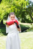stock photo of boxing day  - Portrait of beautiful young bride with boxing gloves punching in park - JPG