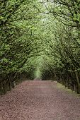 foto of hazelnut tree  - well manicured and maintained hazelnut tree farm in Oregon - JPG