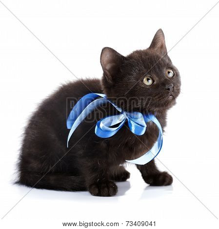 Black Kitty With A Blue Tape.
