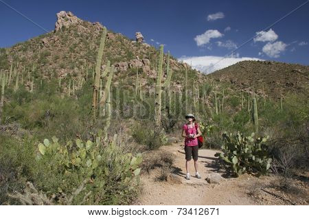 Hiker In The Desert - Saguaro National Park, Arizona