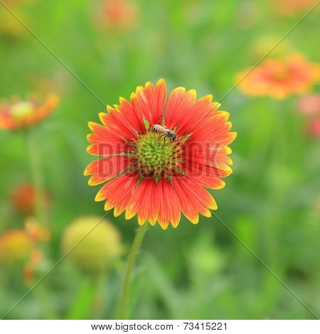 Red flower with bees in the morning