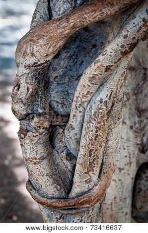 Interlacement On A Tree Trunk