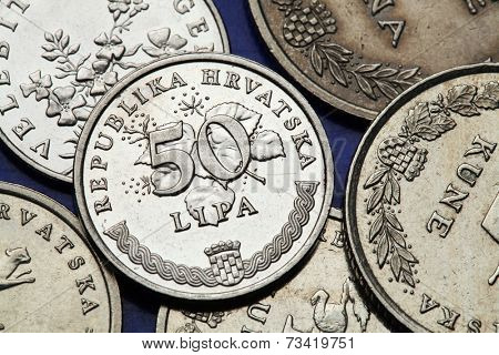 Coins of Croatia. Croatian national coat of arms and linden tree depicted in the Croatian 50 lipa coin.