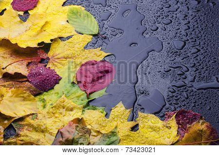 Leaves On Wet Black Background