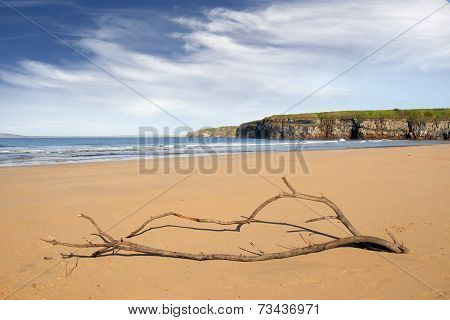 Driftwood On The Beach At Ballybunion