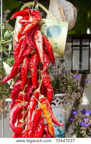 Bunch Of Red Chili Peppers