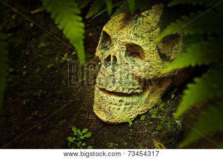 Still Life With Skull In The Forest.