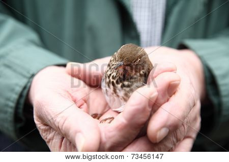 Recovering immature bird held by man