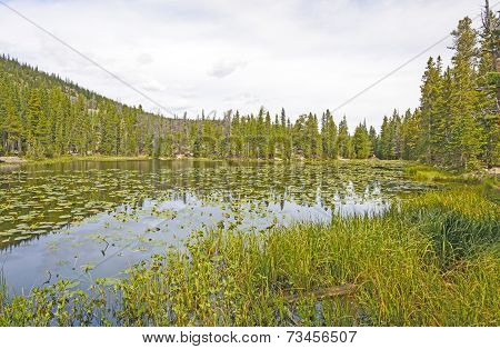 Water Lilies On A Mountain Lake