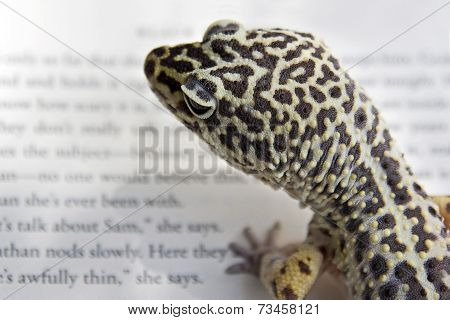 Gecko Reading a Book