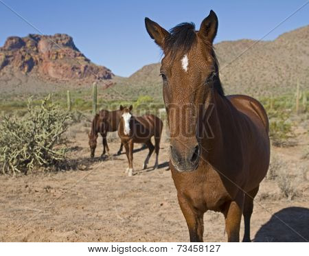 Portrait of a Wild Horse