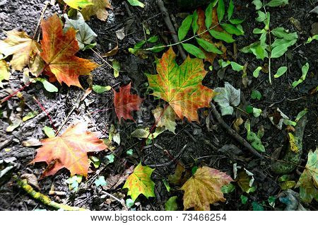 Colourful autumn leaves lying on the ground