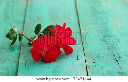 Two red flowers isolated on antique green distressed wood boards