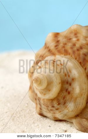 Conch Seashell On Sand