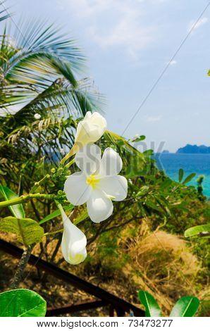 Tropical Verdure Lagoon Serenity