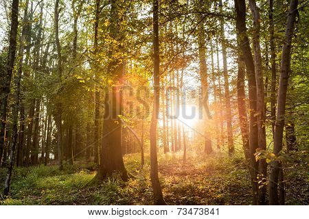 Sun Shining Through Trees In A Forest