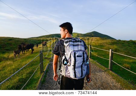 Healthy young man walking with Cows grazing on a green summer meadow