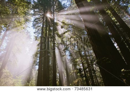 Sunrays through the forest in lady bird Johnson grove