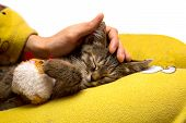 picture of caress  - girl caresses cute sleeping kitten on yellow surface - JPG