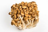 picture of shroom  - Bunch of Shimeji Mushrooms on white background - JPG