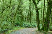 stock photo of temperance  - Temperate rain forest - JPG