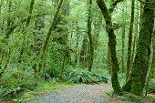 image of temperance  - Temperate rain forest - JPG