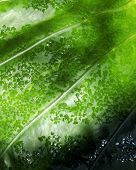 Watery Leaf poster