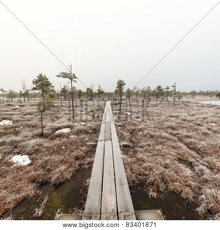 Wooden Boardwalk In Frosty Winter Bog