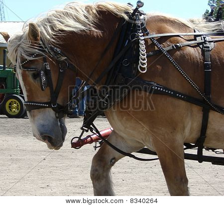 workhorse pulling wagon